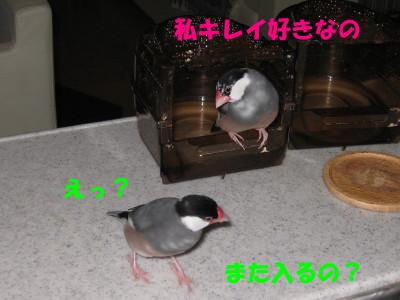 b0158061_2271532.jpg
