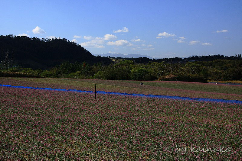 f0174293_20102157.jpg