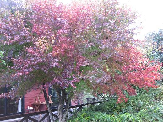 秋も深まってきました (喫茶 風曜日)_f0017696_1350924.jpg