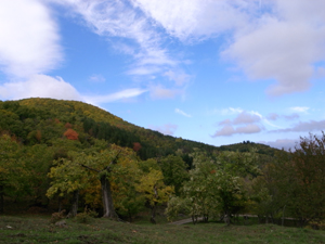 栗の村で栗山見学_f0106597_1554818.jpg