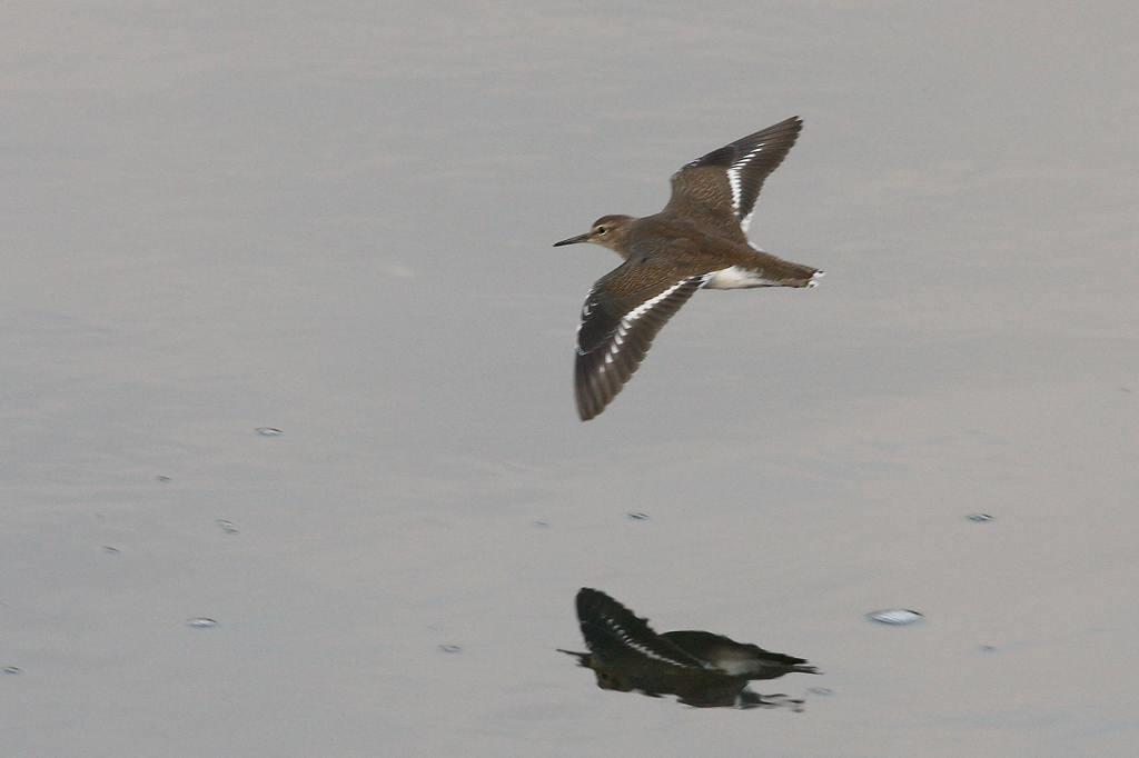 片羽を水面に接触させて/今日の太陽・大黒点_b0024798_5453619.jpg