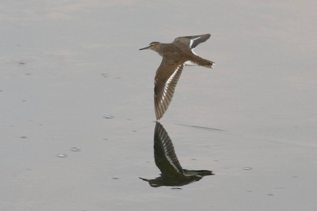 片羽を水面に接触させて/今日の太陽・大黒点_b0024798_545496.jpg