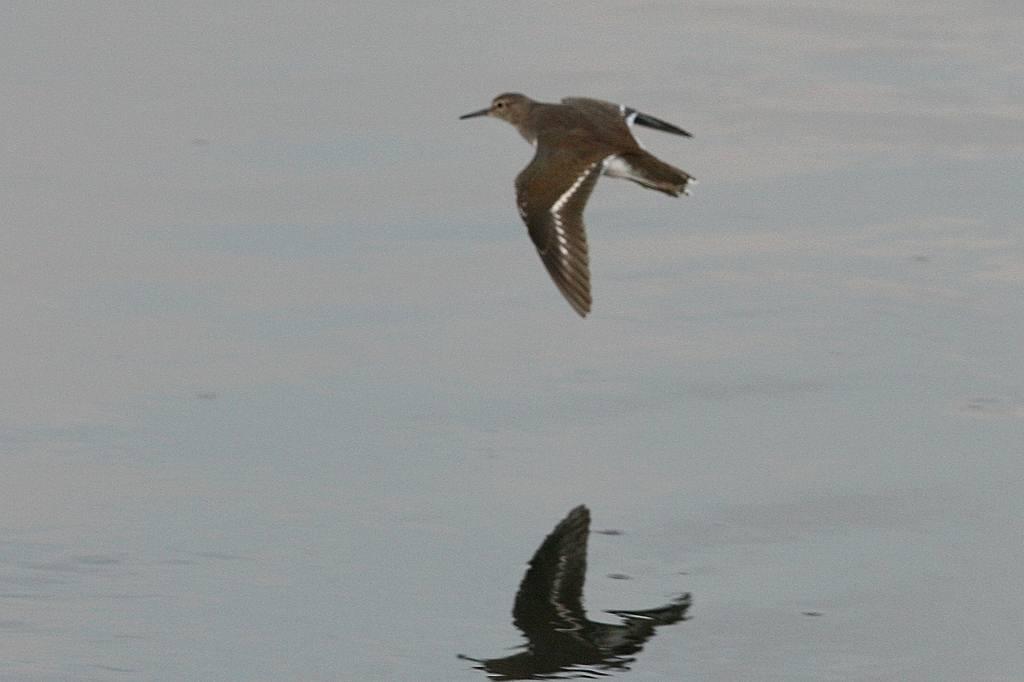 片羽を水面に接触させて/今日の太陽・大黒点_b0024798_546267.jpg