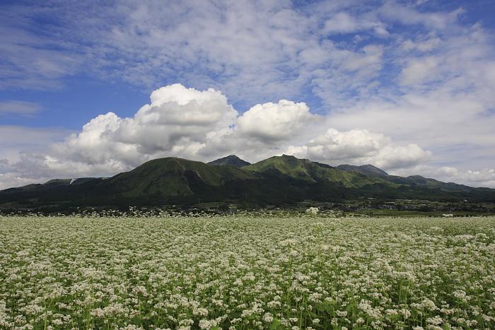 蕎麦の花_e0135098_022887.jpg