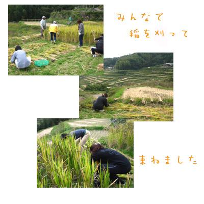 稲刈り①_e0161008_164750.jpg
