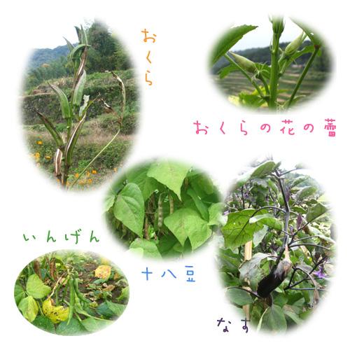 稲刈り②_e0161008_16621.jpg