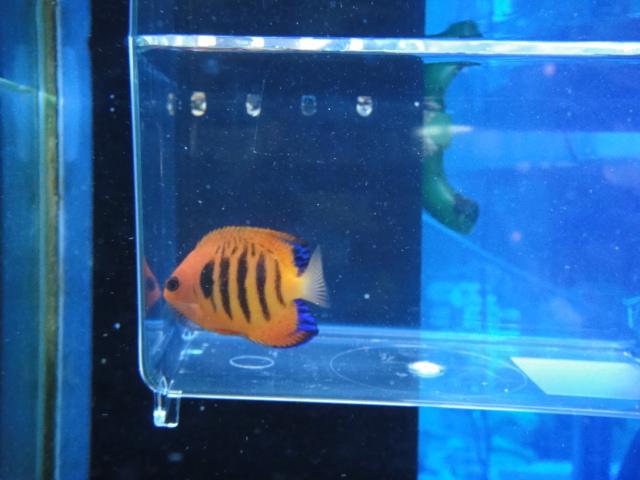 海水魚・サンゴ_f0189122_11281186.jpg