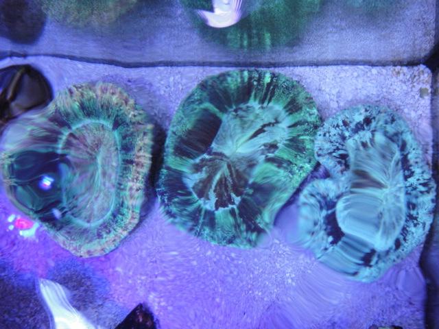 海水魚・サンゴ_f0189122_11305897.jpg