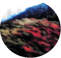 a0098027_16142934.jpg
