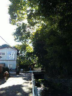 秋空散歩道_a0103940_1345225.jpg