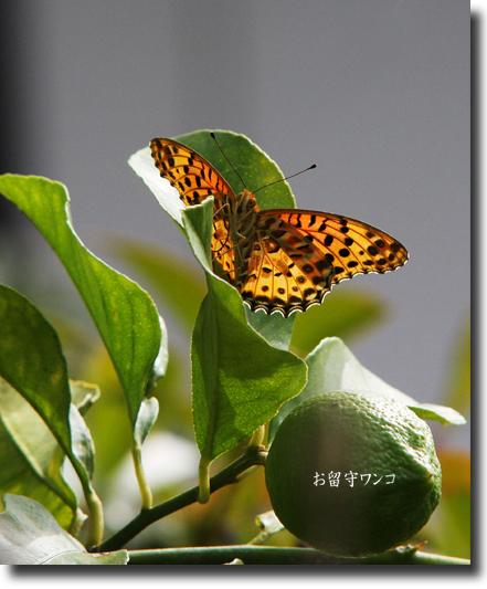 f0111147_2242146.jpg