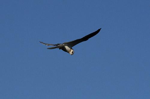 鳥や・・・・_d0081851_0314388.jpg