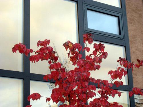 秋、深まる_c0189970_8261058.jpg