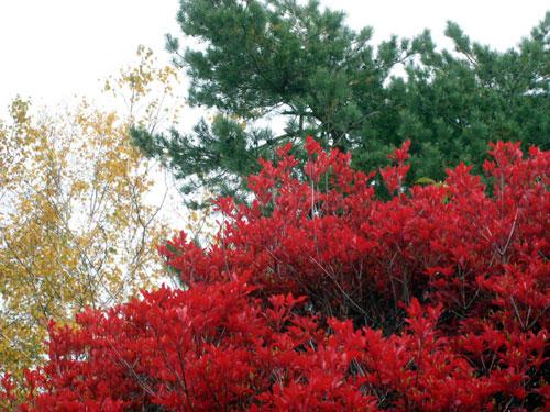 秋、深まる_c0189970_8282598.jpg