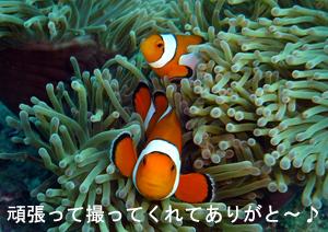蟹チャーハンとハネムーンダイビング!_f0144385_750195.jpg