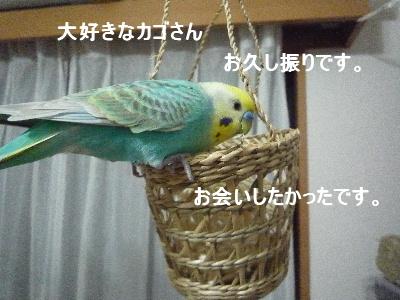 b0062090_1103198.jpg