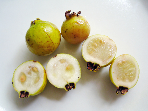 イエローストロベリーグァバの果実