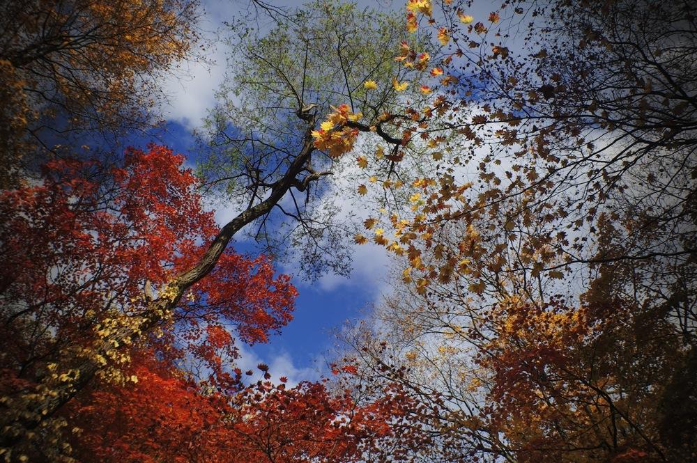 秋の空、シュルシュルシュルシュル、どっか〜ん!_f0042194_112523.jpg