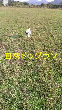 f0175397_18164816.jpg