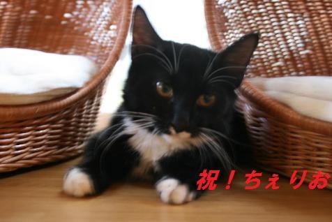 第2回 ちばわんねこ親会(西大井)のご報告_b0087400_22564566.jpg