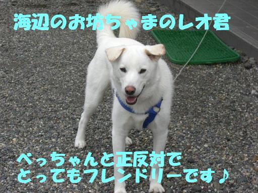 f0121712_1455558.jpg
