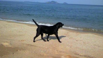 バロン海に行く_c0209415_18374273.jpg