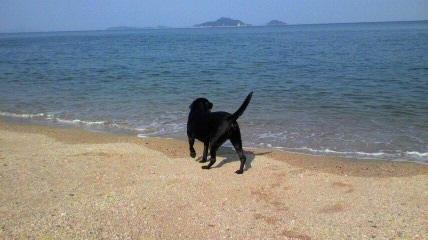 バロン海に行く_c0209415_18434370.jpg