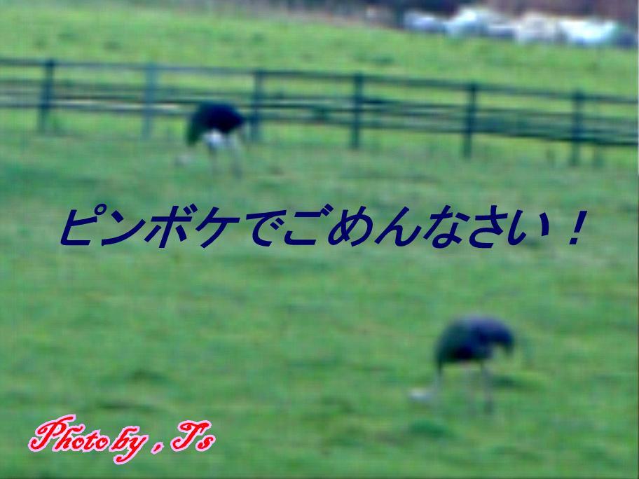 f0147821_12504199.jpg