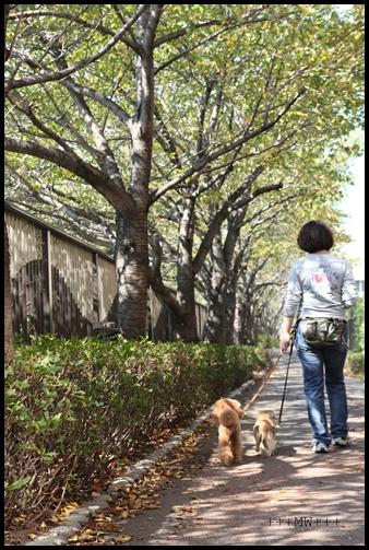 Maruと中目黒に行く。Yuzuも行く。_e0191026_1324116.jpg