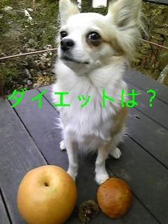 f0148927_19123029.jpg