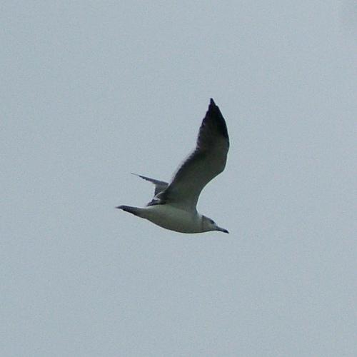 飛ぶ鳥(葛西臨海公園)_e0089232_19531194.jpg
