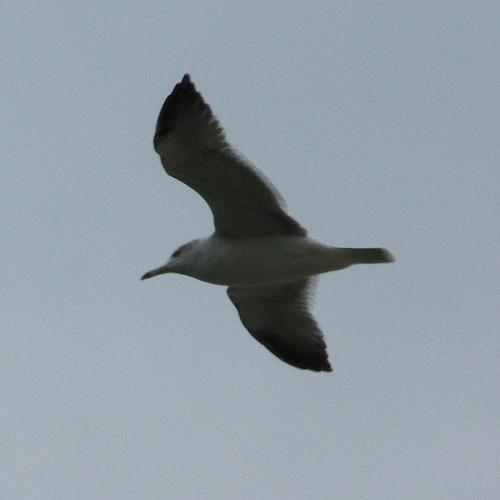 飛ぶ鳥(葛西臨海公園)_e0089232_19533394.jpg