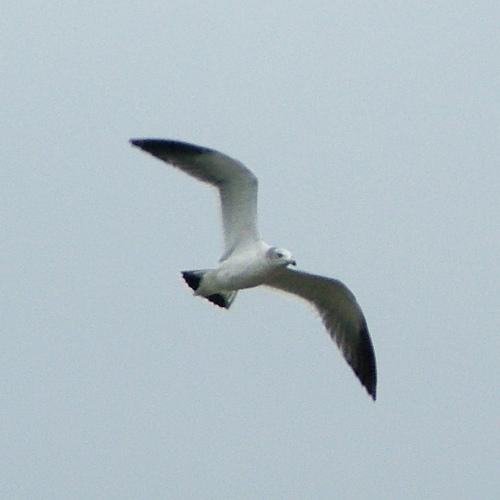 飛ぶ鳥(葛西臨海公園)_e0089232_19534347.jpg