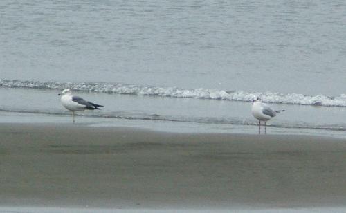 飛ぶ鳥(葛西臨海公園)_e0089232_19535054.jpg