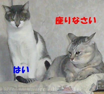 迷える子羊_f0002743_1034084.jpg