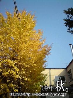 季節を感じる樹。_c0067646_1622893.jpg
