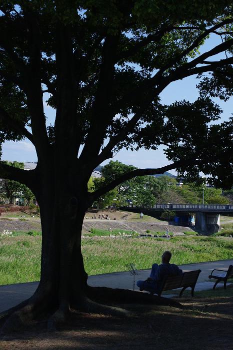 鴨川で木陰のおねぇさんを..._f0152550_2114437.jpg