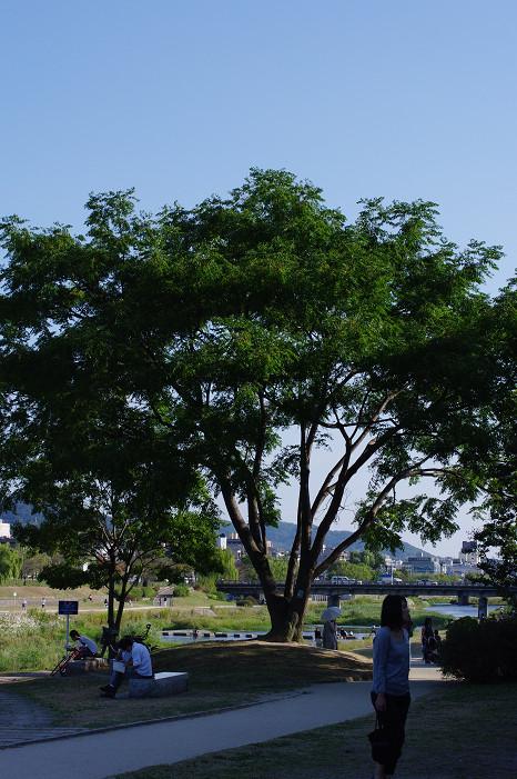 鴨川で木陰のおねぇさんを..._f0152550_21158100.jpg