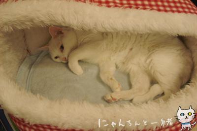 白猫と牛柄猫の大きさ比べ、性格比べ_e0031853_16312264.jpg