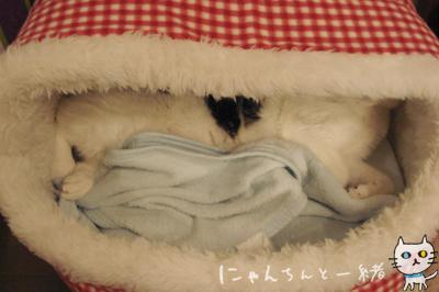 白猫と牛柄猫の大きさ比べ、性格比べ_e0031853_16314667.jpg