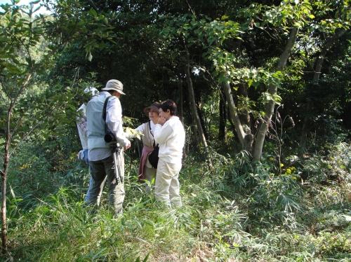 うみべの森「10月度植物調査」_c0108460_15474355.jpg