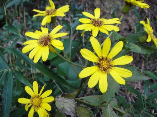 うみべの森「10月度植物調査」_c0108460_15485393.jpg