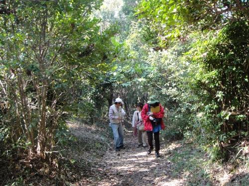 うみべの森「10月度植物調査」_c0108460_1548770.jpg