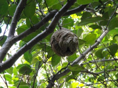 うみべの森「10月度植物調査」_c0108460_15505769.jpg