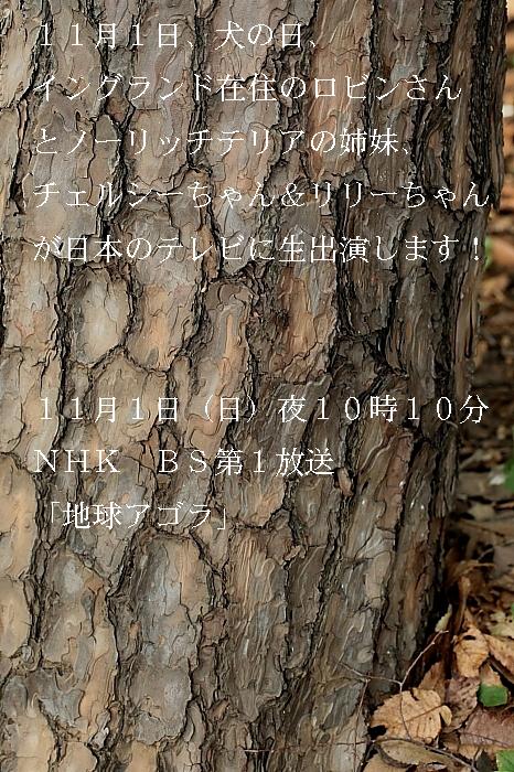 b0181761_138831.jpg