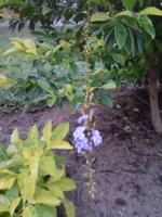 植物編_f0204368_13101536.jpg