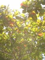 植物編_f0204368_13145948.jpg