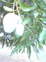 植物編_f0204368_1352944.jpg