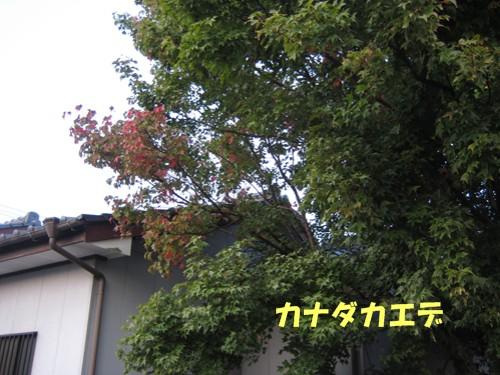 f0003174_1423617.jpg