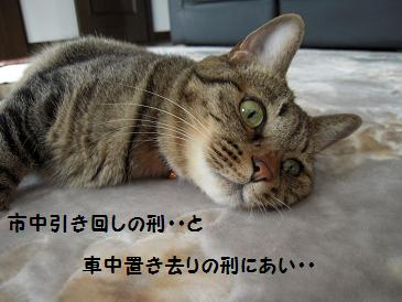 c0139488_024160.jpg